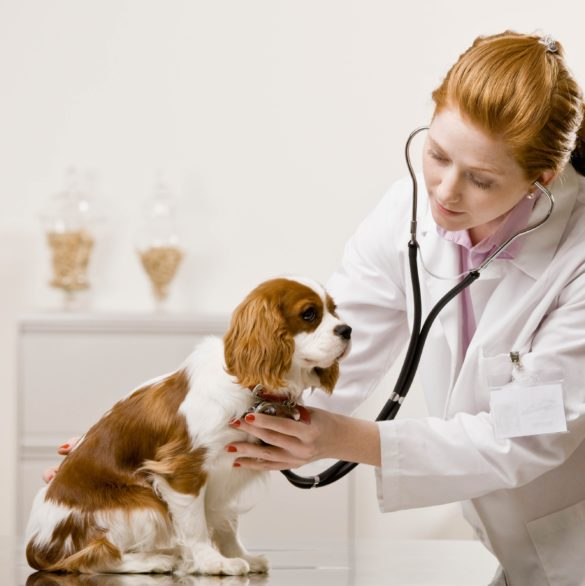 Veterinary drugs development services from EAG Laboratories