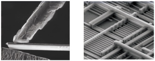 주사 전자 현미경의 예