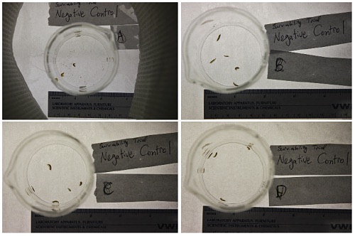 Figure 4. Top-down images of transfer containers for replicates A-D of the negative control group. Three images were taken of each transfer container prior to initiation.