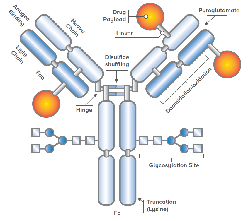 Figure 1. Schematic showing the complexity and various components of an antibody drug conjugate.